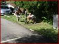 4. NissanHarzTreffen - Bild 167/393